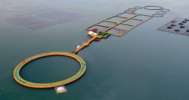 蕉城海洋牧场助力渔业持续发展