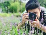 洋中天湖:仲夏之梦的紫色浪漫