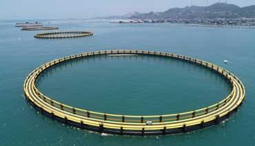 """新型渔排:为海上养殖打造""""避风港"""""""