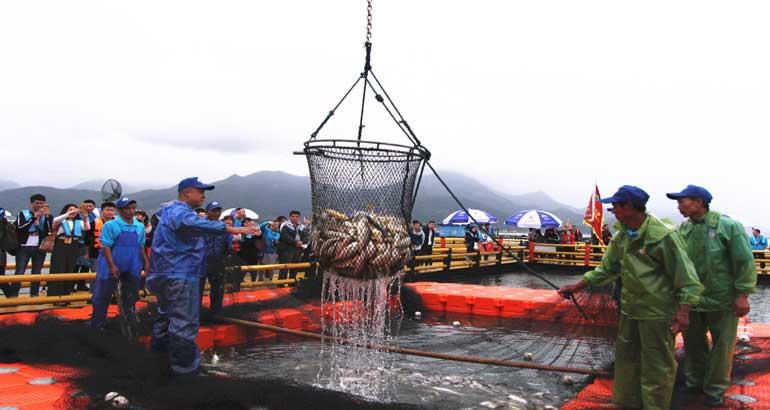 我市举办第二届宁德大黄鱼捕捞季活动