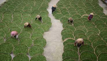 飞鸾:生态茶产业 发展大文章