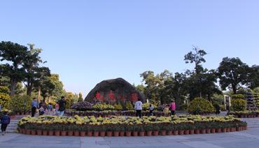 南岸公园三万朵菊花傲然盛放