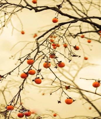 秋来又秋去 秋色醉蕉城