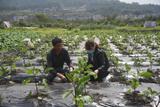 金涵:多措并举提产能 助力农户春耕备耕