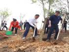市领导莅蕉开展全民义务植树活动